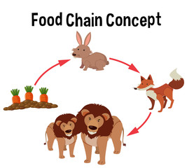Food chain concept diagram