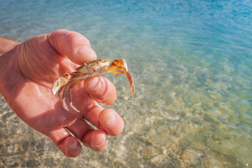 Live crab in the hand of a man on the background of the sea