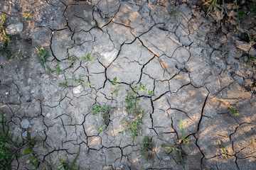 Vertrockneter, ausgelaugter Boden, Dürre / Desertifikation