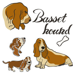 Basset hound dog breed vector illustration set isolated. Doggy image in minimal style, flat icon. Simple emblem design for pet shop, zoo ads, label design animal food package element. Gun dog sign.