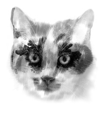 black and white cat close up in the detail