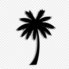 black silhouette of palm tree icon on transparent background.
