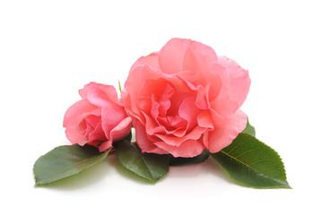 Beautiful pink flowers.