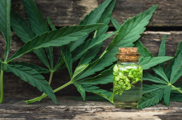 Cannabis essential oil in the vial. Herbal medicine. Naturopathy.