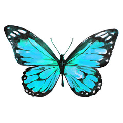 beautiful blue butterfly,watercolor,isolated on a white