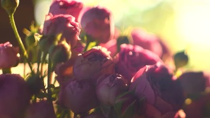 Fotoväggar - Rose. Bouquet of pink blooming roses. Rose flowers bunch in sun light, nature. Slow motion 4K UHD video 3840X2160