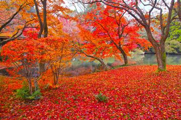 散り紅葉と池