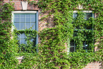 Old Red Brick Building with Vines