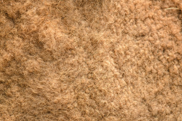 close-up Camel fur - natural texture