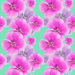 Geranium, pelargonium. Seamless pattern texture of flowers. Floral background, photo collage