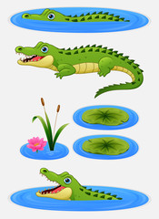 Set of cartoon crocodile and water lily