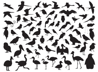 70 Bird Silhouette Vector Illustration