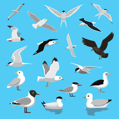 Various Seagull Tern Albatross Cartoon Vector Illustration
