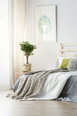 Poster above plant next to bed with grey blanket in minimal bedroom interior. Real photo