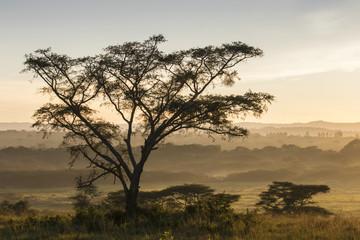 Landscape in morning mist, Ishasha, Queen Elizabeth National Park, Uganda, Africa