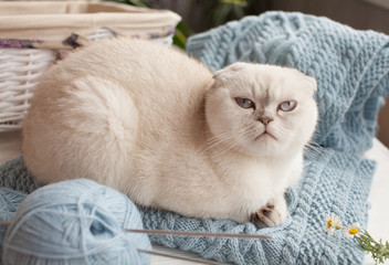 The cat sits on a knitted sweater