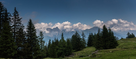 Wall Mural - gorgeous Swiss Alps mountain landscape in summer with forest in the foreground