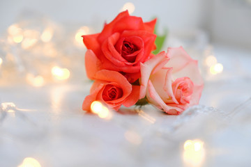 roses with bokeh background