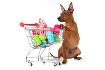 Hund mit Einkaufswagen voller Hundezubehör