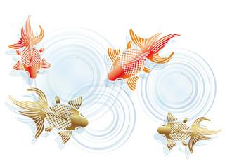 和柄 金魚の納涼イラスト
