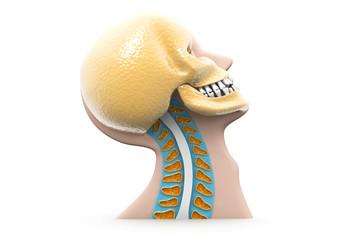 Human head 3d illustration