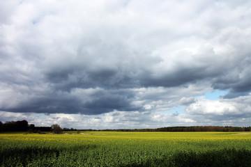 Rapsfeld mit bewölktem Himmel
