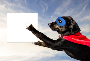 Super Hero Dog flying with blank sign