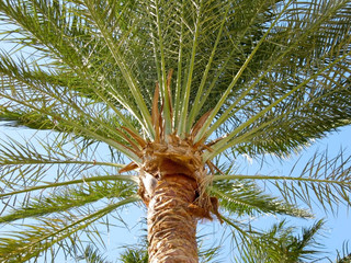 Palm tree and leaves