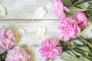 Closeup of beautiful pink Peonie flowers with petals on white wooden background. Flat lay
