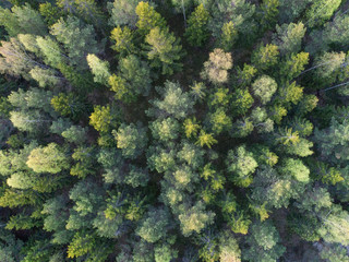 Aerial view of boreal forest or taiga forest
