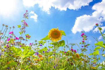 Wall Mural - Feld mit buntem Blumen in der Sonne