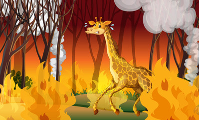 Giraffe Running Away From Firewild