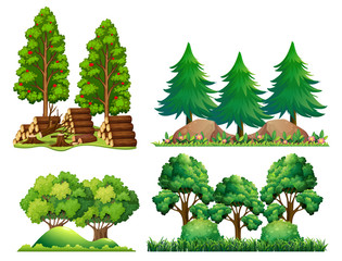 A Set of Forest Landscape