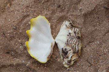 Closeup top view of seashell isolated on sandy surface of tropical beach. Horizontal color photography.