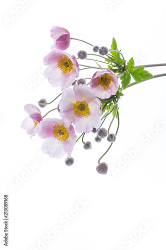 Cute pink flowers stock photo and royalty free images on fotolia cute pink flowers mightylinksfo