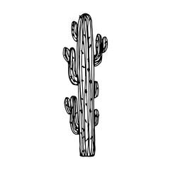 cactus big with needles vector