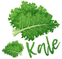 Kale vegetable icon. Cartoon vector illustration isolated on white background. Series of food and drink and ingredients for cooking
