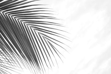 palm coconut leaves  - monochrome