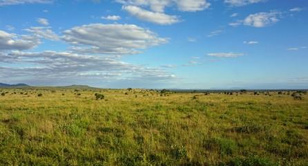 natural green landscape in kenya