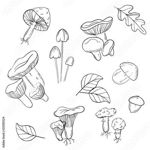 Vector Mushrooms Pattern Modern Monochrome Mushrooms Line