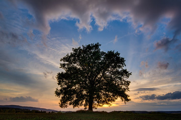Amazing summer dramatic landscape photo of a single tree on colorful summer sunset background.