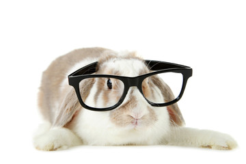 Beautiful rabbit with glasses on white background