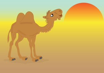 Camel in the desert, vector
