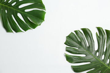 Beautiful tropical leaves on white background