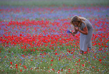 A woman collects flowers during the annual blossom in Castelluccio di Norcia near Perugia