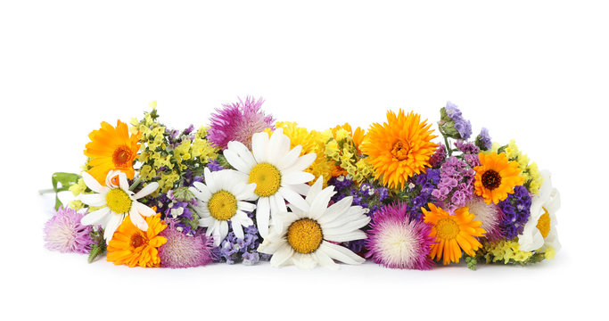 Bunch of beautiful wild flowers on white background
