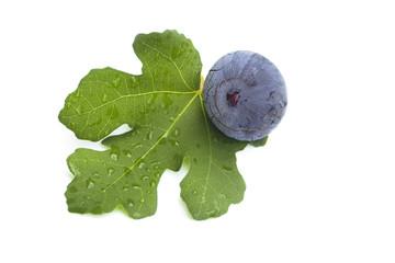 Fresh single fig on white background