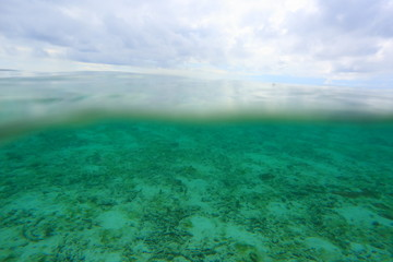 Amazing view on both above water sutface and under water surface world.  Amazing nature backgrounds. Maldives, Indian Ocean