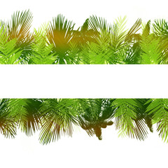 Set of palm leaves on white background.