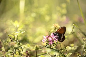 Butterfly posing